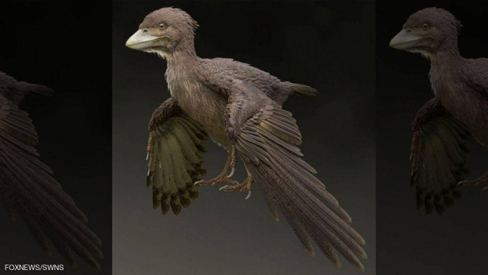 """عاش قبل 120 مليون عام.. العثور على أحفورة طائر """"لا يطير"""""""